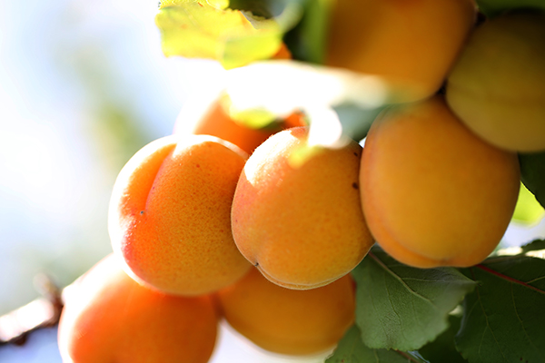 Summer offers the best of itself. Good to see you, peaches and apricots!